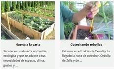 Llévame al huerto, un programa para aprender a cultivar en casa - Euskadi+innova | ADI! | Scoop.it