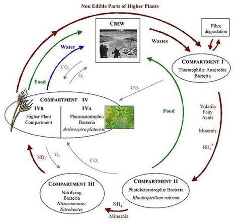 Mars, le lac Tchad et la bactérie | Spiruline et Alimentation | Scoop.it