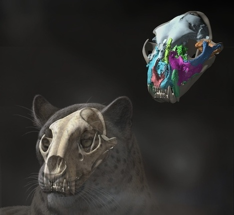 This Fossil Skull Unearthed in Tibet Is the Oldest Big Cat Ever Found | What's me | Scoop.it