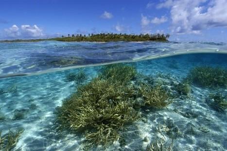 More, Bigger, Better Marine Conservation | Nature conservation | Scoop.it
