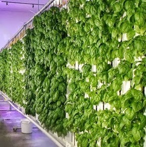 Is the Sky Falling Yet? | Vertical Farm - Food Factory | Scoop.it