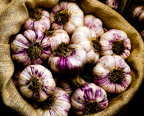 Types of Garlic - Mmm Garlic | Gourmet Garlic | Scoop.it