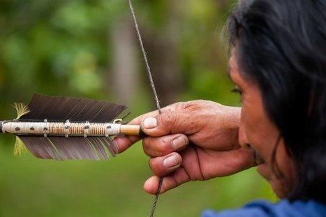 La tradition de l'archerie chez les Wayampi : un artisanat en péril | L'Etablisienne, un atelier pour créer, fabriquer, rénover, personnaliser... | Scoop.it