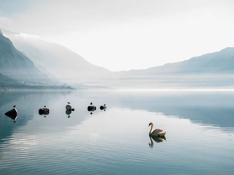 Swan Sunrise Image  National Geographic Photo of the Day   Photoshop and Illustrator   Scoop.it