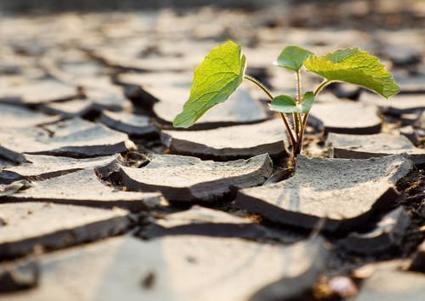 L'agriculture africaine continue de payer un lourd tribut aux catastrophes naturelles | Questions de développement ... | Scoop.it