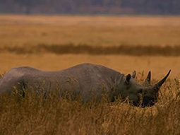 Mozambique: No rhinos left in Limpopo National Park | Saving All Animals | Scoop.it