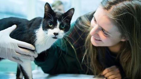 Comment une famille a retrouvé son chat disparu depuis 7 ans | CaniCatNews-actualité | Scoop.it