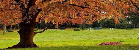 Paysages d'automne | Revue de Web par ClC | Scoop.it