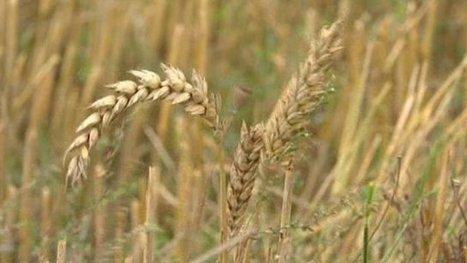 Les agricluteurs payent pour semer leurs propres graines - France 3 Picardie   Le Fil @gricole   Scoop.it