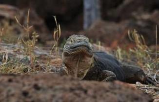Reptiles de Galápagos | El reino animal U.E.F. Fray B. de las Casas S. | Scoop.it