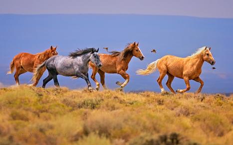 Wild Equine Exuberance by Michael Menefee   haridy   Scoop.it