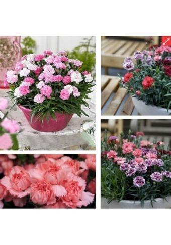 Cung cấp các loại Hạt giống hoa Hà Nội | Noithatmax.com | Scoop.it