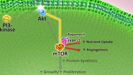 mTOR Inhibitors in the Treatment of Breast Cancer | Breast Cancer News | Scoop.it