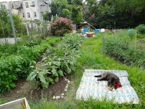Sowing the Seeds - Sizzlin Summer - Baltimore City Paper | Vertical Farm - Food Factory | Scoop.it