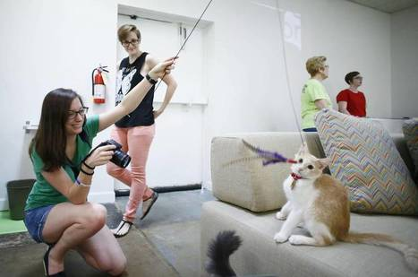 Feline fanatics flock to Dallas' first cat café | Love Of Cats | Scoop.it
