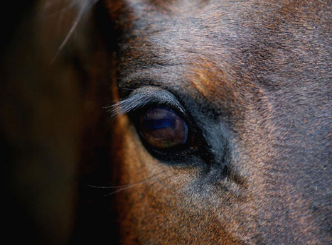 Performance Management – Breeding Thoroughbred Leaders | Human Value Realized | Scoop.it