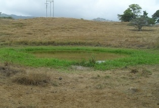 El propósito en Tolima es mejorar la competitividad agropecuaria | Contexto Ganadero | produccion animal | Scoop.it