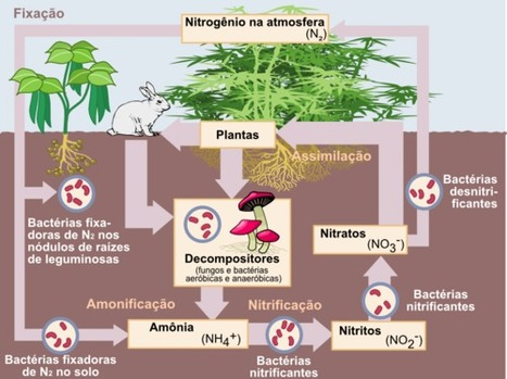 Ciclo do Nitrogênio | Aulas de biologia 1°tri | Scoop.it