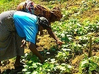 International Year of Family Farming | International Food Policy ... | Linking small holder farmers to markets | Scoop.it
