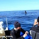 Killer Whale's Silent Seal Death | Dolphins | Scoop.it