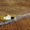 Vinideal - A la recherche de votre Vin Idéal ! www.vinideal.com