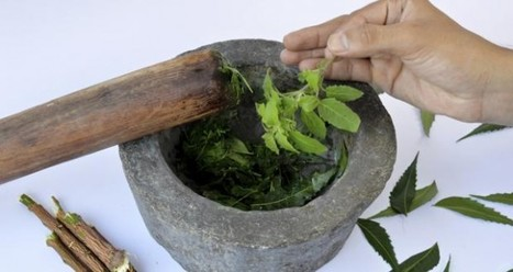 Tulsi — Natural remedy for controlling diabetes and cholesterol | | Mast Khabar (मस्त खबर) | Scoop.it