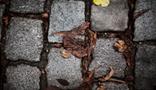 Brèves de trottoirs | crossmedia-transmedia | Scoop.it