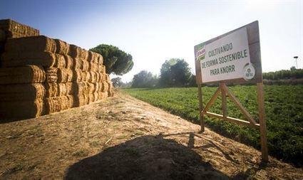 RSC.-Unilever ayuda a 800.000 agricultores y logra que el 55% de materias primas agrícolas procedan de fuentes sostenibles | RSC Valor compartido | Scoop.it