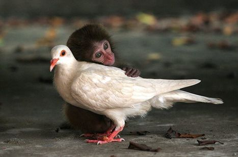 Unlikely animal friendships - in pictures | Amusing, Shocking & Thought-Provoking News | Scoop.it