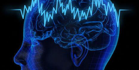 Le cerveau assiégé par les perturbateurs endocriniens | Toxique, soyons vigilant ! | Scoop.it