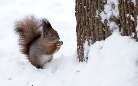 Gardening in the snow tips - Telegraph | home, plumbing and gardening tips | Scoop.it