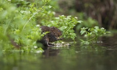 #WindinTheWillows #River 'risks running #dry' if new water bill is passed! #Environment #Habitat #Threat | Rescue our Ocean's & it's species from Man's Pollution! | Scoop.it