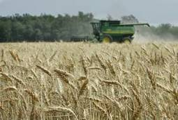 Scientists work to help Oklahoma's wheat industry adapt to climate change | Sustain Our Earth | Scoop.it