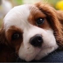 Ebola : plus chanceux qu'Excalibur, le chien de la patiente texane sera épargné | CaniCatNews-actualité | Scoop.it