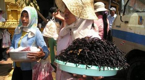 Pourquoi l'alimentation insectivore pourrait bien être le régime préférentiel des astronautes qui partiront sur Mars | Entomophagy: Edible Insects and the Future of Food | Scoop.it