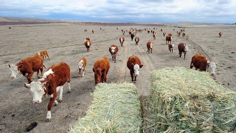 Even In A Desert, Drought Spells Trouble For Ranchers   Comunikafood - marketing food 2.0   Scoop.it