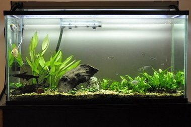 Acrylic Aquariums – The Pros Weigh Over the Cons | Green living | Home Improvement | Scoop.it