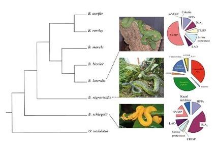 Proteómica: búsqueda de soluciones a enfermedades desatendidas   Oncocercosis (Onchocerca volvulus)   Scoop.it