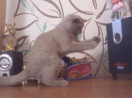 Un chat tente d'attraper l'air déplacé par un caisson de basse (VIDEO) | CaniCatNews-actualité | Scoop.it