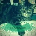 Netiquette, le buone maniere online - Pizuro | Web marketing | Scoop.it