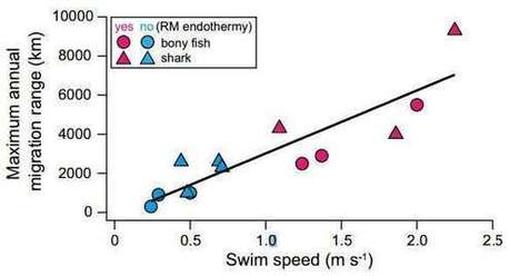 Warm bodied fishes found able to swim farther and faster than cold bodied fish | Amazing Science | Scoop.it