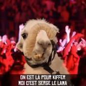 Serge le lama : Lamaoutai, le clip parodique de Philippe Krier - PureBreak | Serge le lama | Scoop.it