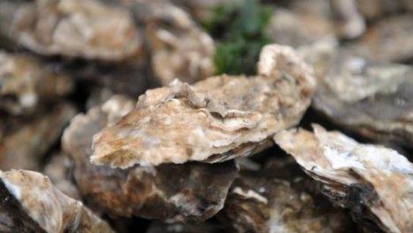 Baisse de la mortalité des huîtres sur le Bassin d'Arcachon - Francetv info | MULTIMEDIA ET TOURISME | Scoop.it