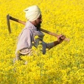 A Development Thinking | CSRlive.in (CSR, Sustainability News, Analysis & Connect in India) | Scoop.it