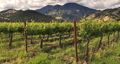 Vins du monde: L'Italie est le plus grand producteur de vin au monde (en volume)<br/>La France le plus grand exportateur (en valeur) | Les fili&egrave;res bio | Scoop.it