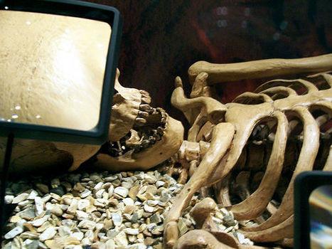 MY DAD IS RICH – L'héritage des richesses daterait du Néolithique | World Neolithic | Scoop.it