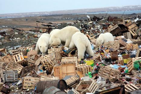 "Teaching People Climate Science ""Dampens Public Concern"" | Geology | Scoop.it"