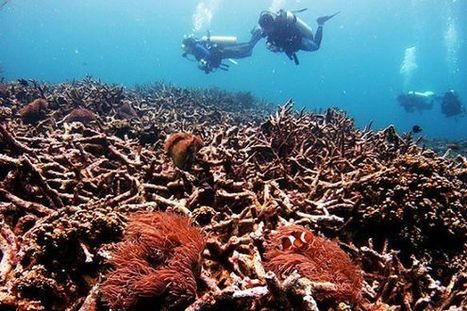 Climate Change Is Killing Coral Reefs, and That Could Cost the Economy $1 Trillion a Year | LibertyE Global Renaissance | Scoop.it