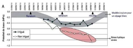 Les conséquences du stress hydrique sur la vign... | Oenotourisme en Entre-deux-Mers | Scoop.it