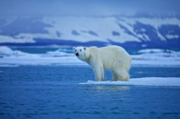 Odds that global warming is due to natural factors: Slim to none | Climate change challenges | Scoop.it
